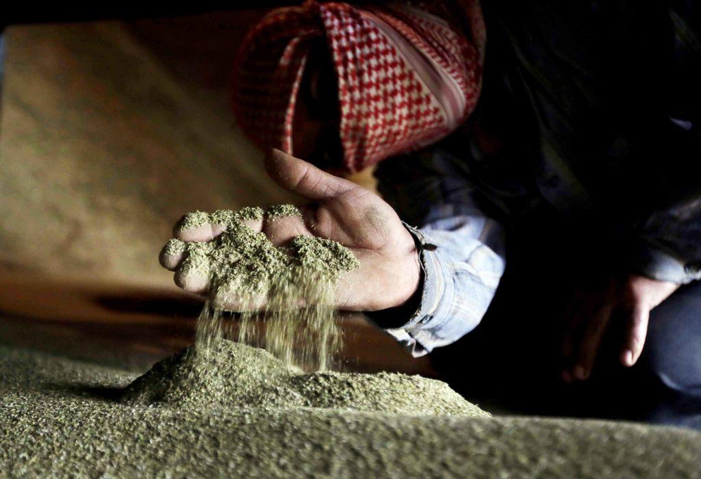 À Yammouné, dans la plaine de la Bekaa, 80% des foyers cultivent le chanvre.