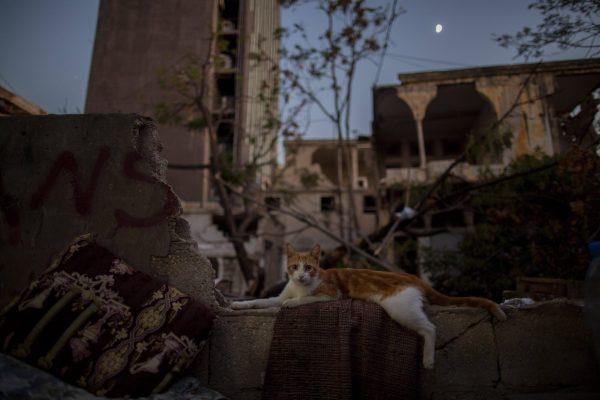 Parmi les débris de la double explosion meurtrière de Beyrouth.