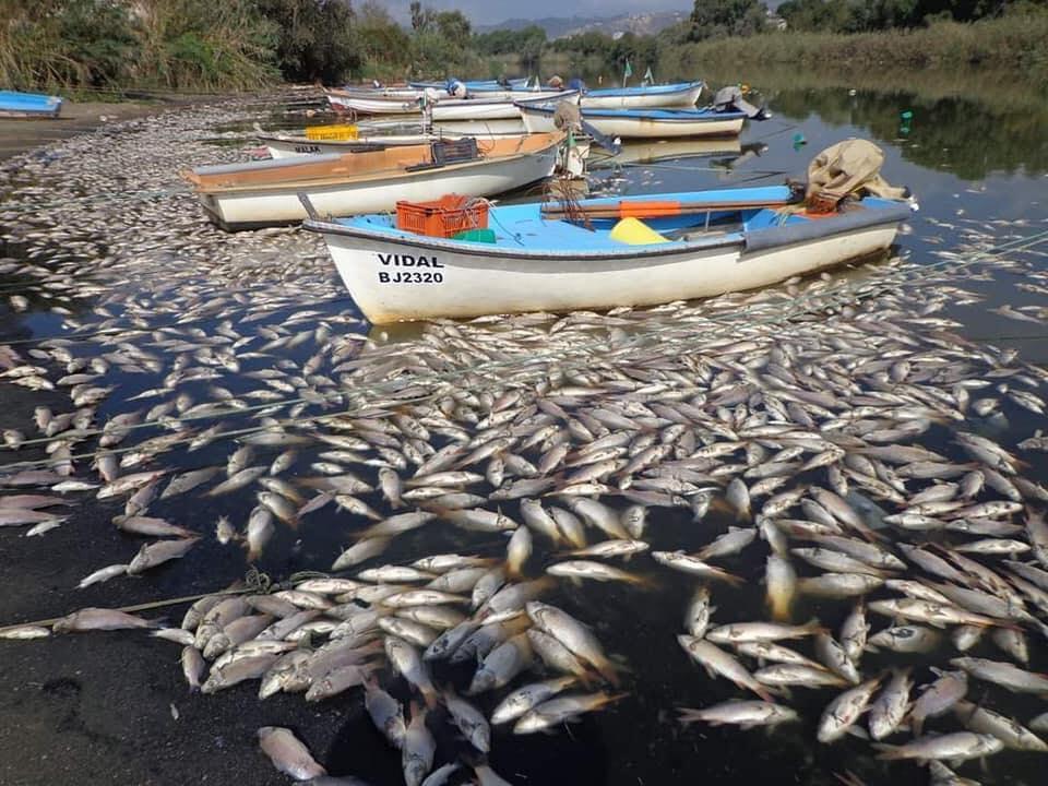 En découvrant des milliers de poissons flottant ventre à l'air à l'embouchure de l'Oued Soummam le 13 septembre 2020, les riverains et pêcheurs de Bejaïa ont décidé de dénoncer les différentes installations industrielles situées à proximité.