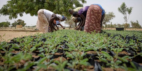 """Projet """"Un million d'arbres"""" men"""" par Sos Sahel avec les paysans de la province de la Gnagna, au Burkina Faso, en juin 2012"""