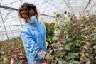 Bigot Flower Farm, une entreprise soutenue par Proparco.