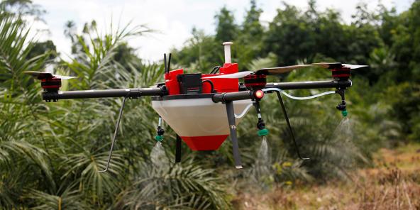 Drone dans une plantation de palmiers à huile à Tiassale, en Côte d'Ivoire, en mai 2019