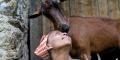 Agitu Idea Gudeta, alors âgée de 40 ans, avec l'une de ses chèvres près de Trente, en Italie, le 11 juillet 2018.