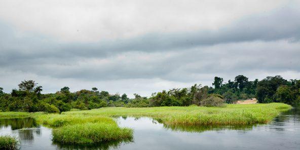 Marais de la rivière Likouala-aux-Herbes, dans le département de la Likouala (nord-est), particulièrement riche en tourbe.