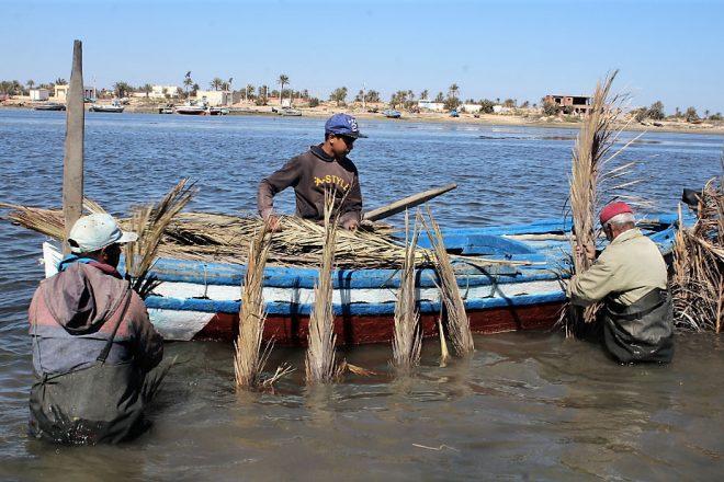 Tunisie : aux Kerkennah, la pêche à la charfia a de beaux jours devant elle