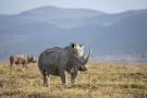 Conservation Capital a lancé le Rhino Impact Bond, un placement lié à la population de rhinocéros au Kenya et en Afrique du Sud.