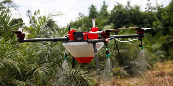 Drone dans une plantation de palmiers à huile, à Tiassale, en Côte d'Ivoire. Les drones pulvérisateurs permettent de traiter 1 hectare douze fois plus vite qu'un travailleur manuel.