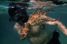 Le film Netflix «La Sagesse de la pieuvre», de Pippa Ehrlich et James Reed, a reçu le Bafta du meilleur documentaire le 11 avril.