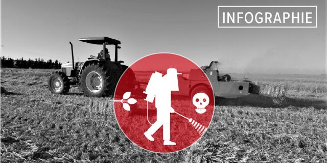 [Infographie] Algérie, Maroc, Tunisie : quand l'Europe exporte ses pesticides toxiques au Maghreb