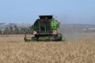 Un champ de blé à Sidi Thabet, en Tunisie.