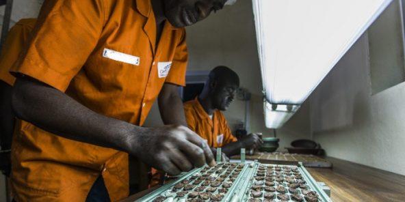 Unité de transformation du Cacao dans l'usine de Choco Ivoire à San Pedro, dans le sud-ouest de la Côte d'Ivoire. Mars 2016.