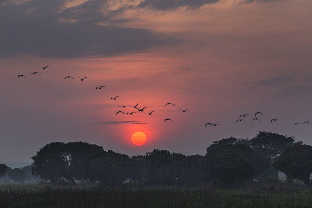 Vol d'oiseaux sauvages à Kavanyongi, au nord du lac Édouard, en RDC.