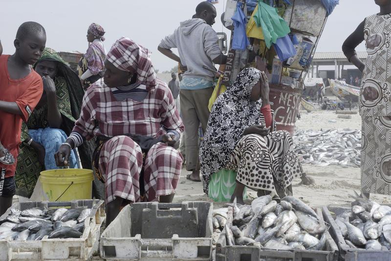 Des femmes sénégalaises transformatrices, du marché aux poissons de Mantulaye Dieye, à Cayar.