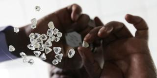 Un « sightholder » évalue une sélection de pierres brutes. Les valoriser est crucial pour cet État dont la filière pèse plus  40% de son PIB.