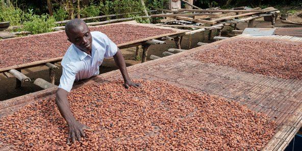 Séchage des fèves de cacao au Ghana